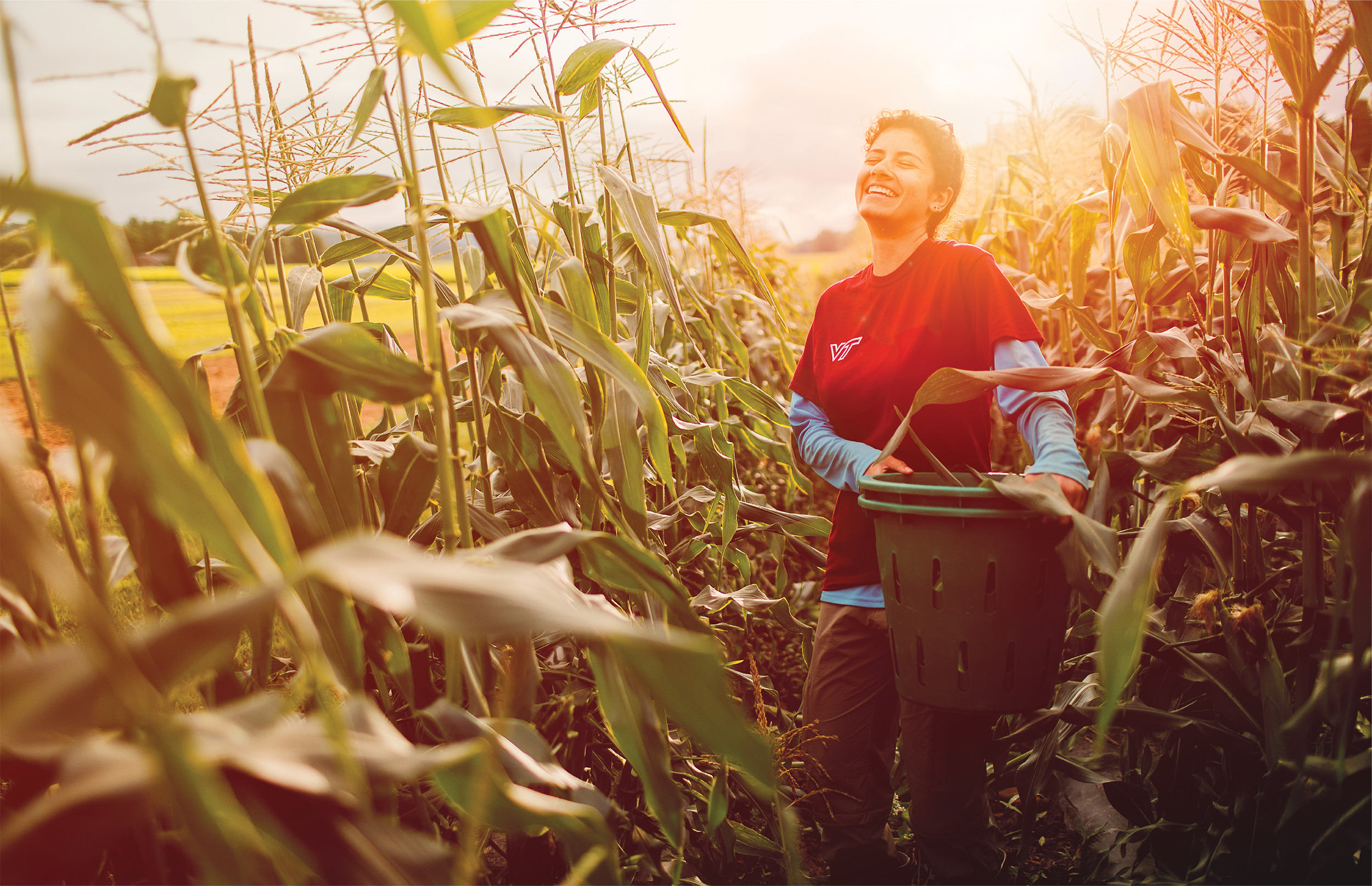 Image of a student carrying a basket in a cornfield